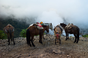 Mules at Maizal in the mist, en route to Machu Picchu from Choquequirao along the Vilcabamba range.