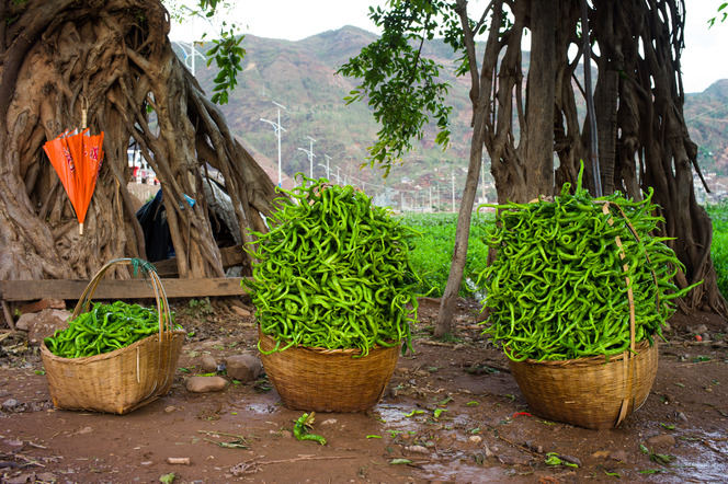 Pepper harvest outside of Nánjiàn