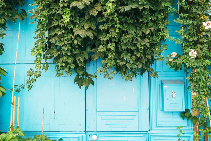 countryside, architecture, park, languedoc, door, Olargues, town, Languedoc, Parc naturel régional du Haut-Languedoc, vine