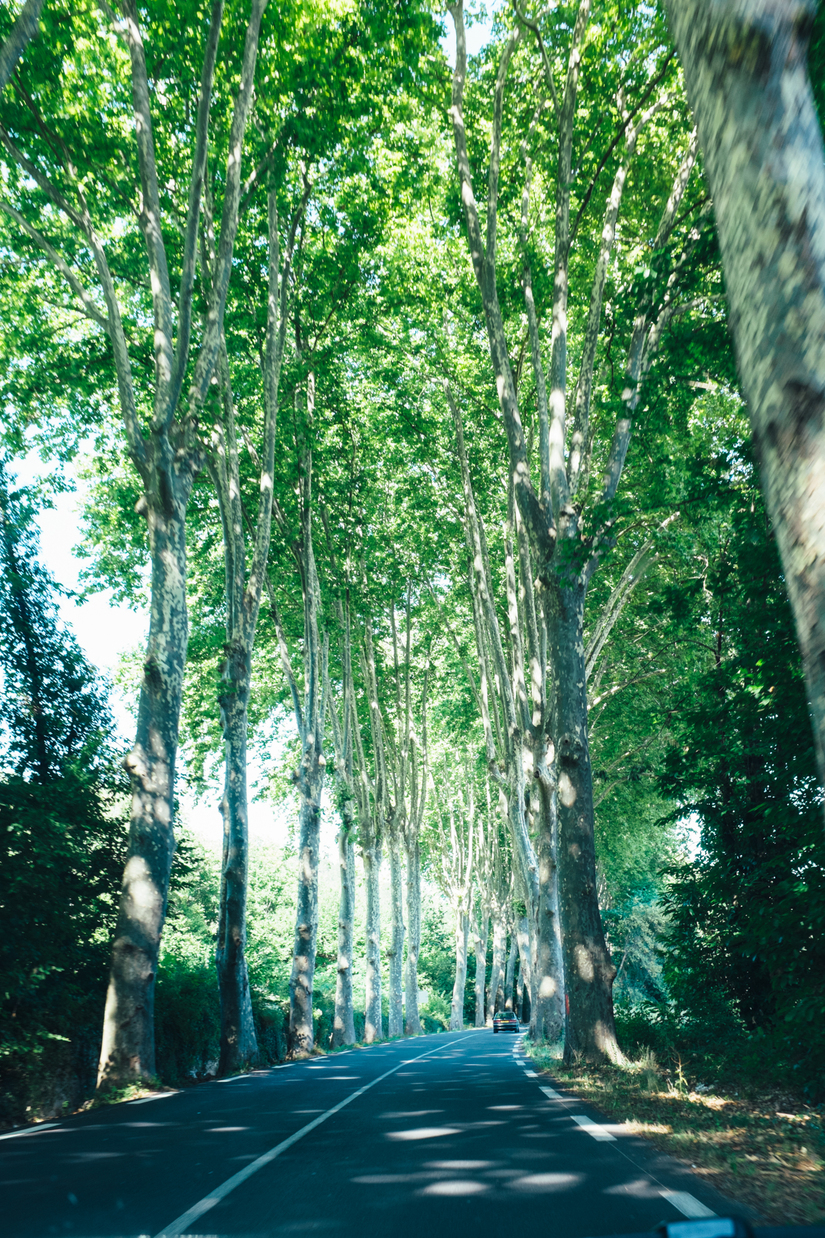 driving, trees, road trip, road, languedoc, Languedoc