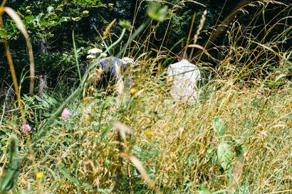 languedoc, raspberry, Languedoc, Parc naturel régional du Haut-Languedoc, picking